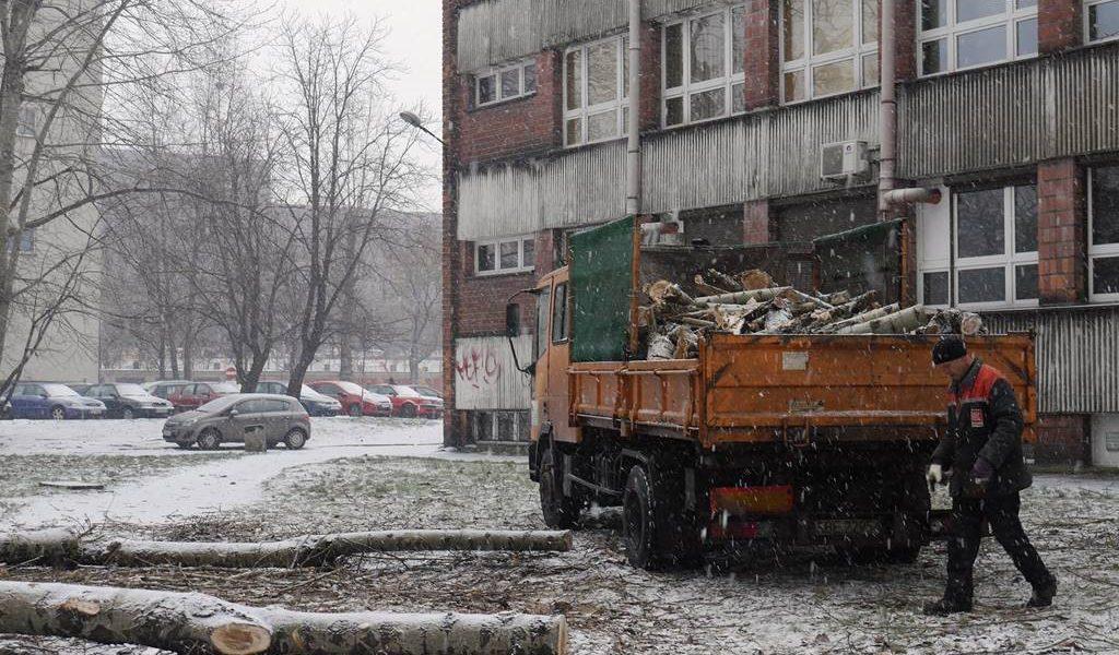 wycinka-drzew-ul-uniwersytecka-1