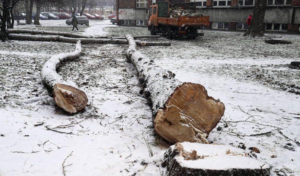 Wycinka drzew ul. Uniwersytecka 3