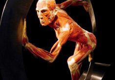 Wystawa ludzkich ciał w Katowicach: rozdajemy bilety