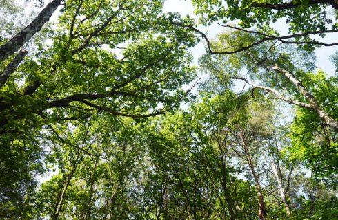 Radni murem za drzewami w Murckach. Apelują do leśników