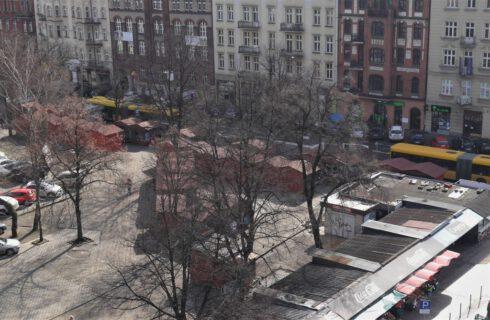 Drzewa w centrum Katowic do wycinki. Do urzędu trafił wniosek