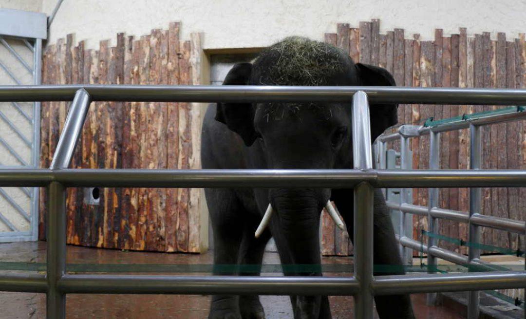 Mieszkańcy regionu przywitali słonie w śląskim ZOO [WIDEO]