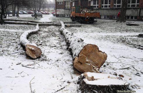Nowe zasady wycinania drzew