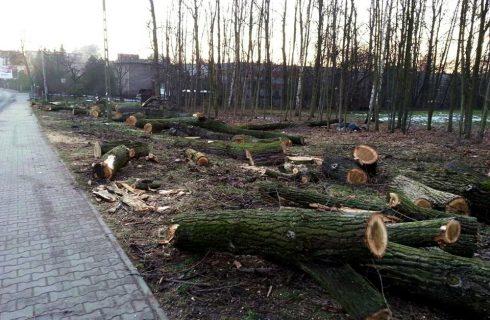 Mieszkańcy zaniepokojeni wycinką drzew. Miasto uspokaja