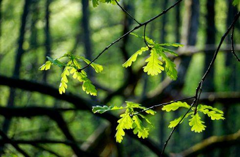 W sobotę każdy będzie mógł zasadzić swoje drzewo w katowickim lesie